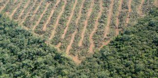 deforestación argentina
