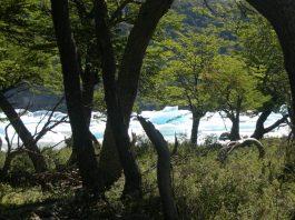 Plantar árboles ecología