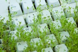 Verde,_verde,_verde