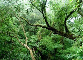 Foto: bosque de yungas en Catamarca, Argentina