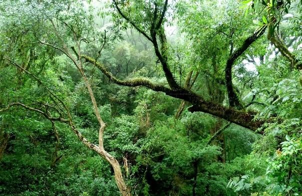 Política ambiental de Argentina. Foto: bosque de yungas en Catamarca, Argentina