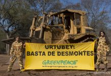 Desmontes Greenpeace