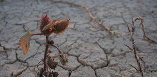 Desertificación: efecto del cambio climático