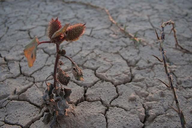 Desertificación: efecto del cambio climático en Argentina