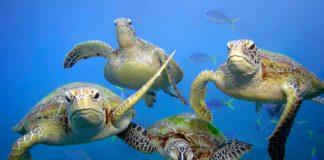WWF Océanos