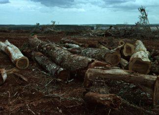Día de la Tierra: Semáforo ambiental de Argentina