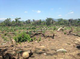Cambio climático en Colombia. Foto: Agencia Prensa Rural. Licencia: Creative Commons BY-NC-ND 2.0.