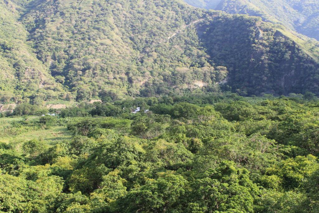 Bosque seco tropical en Orobajo en época de invierno. Foto. Jorge David Higuita.