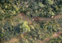 Bosques. Deforestación. Argentina.