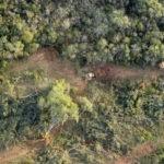 Bosques. Deforestación en Argentina.