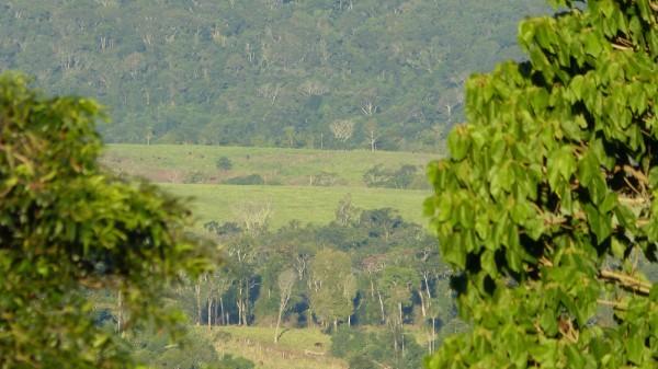 Bosques. Foto: Mariano Mantel. Licencia: CC BY-NC 2.0.