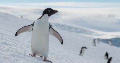 La Comisión del Océano Antártico se reunirá en octubre para considerar la propuesta de la Unión Europea de crear un área protegida marina de 1,8 millones de kilómetros cuadrados en la región antártica del Mar de Weddell.