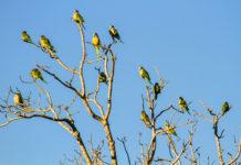 Biodiversidad en los Esteros del Iberá. Foto: Dianne Graham. Licencia: CC BY ND 2.0.