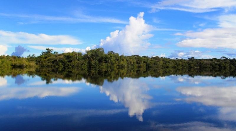 La Cuenca Amazónica tiene la más alta biodiversidad de peces del mundo, con aproximadamente 2.400 especies.