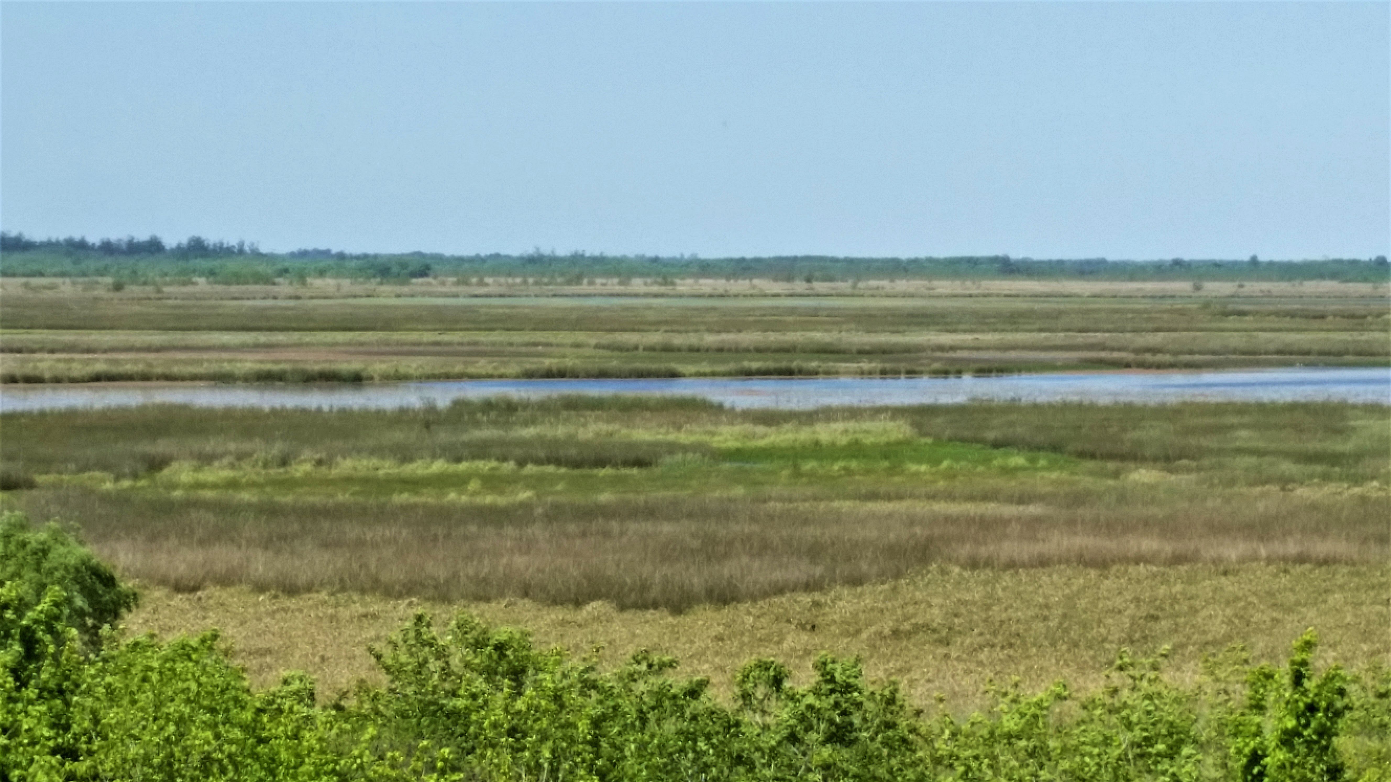 Laguna del Parque Nacional Ciervo de los Pantanos, sitio Ramsar y AICA. Foto: Damián Profeta. Licencia: CC BY-NC 2.0.